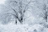 2008 - Ice Storm - Toronto, Ontario - Canada