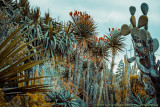 2017 - Madeira Botanical Garden - Funchal, Madeira -Portugal
