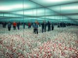 2018 - Yayoi Kusama Infinity Mirrors (Phalli's Field) - AGO - Toronto, Ontario - Canada