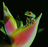 Frogs and Salamanders from Around the World
