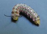 Pink-striped Oakworm Moth Caterpillar (7723)