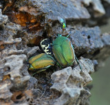 Beetles and Related Insects