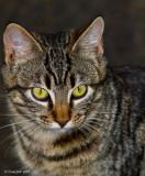 KittyKat Close-Up January 12