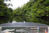Boat tour over the Daintree River