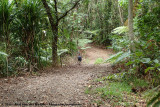 Just a random forest road in Daintree