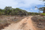 Cape York backroad