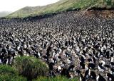Penguin-Rookery