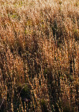 Backlit-Weeds-in-Fall