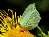 A butterfly on a flower in June