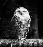 North Island Bird Sanctuary, Errington - October 21, 2017