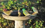 At the Bird Bath