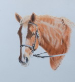 Chestnut horse - Pastel pencils on light grey Pastelmat