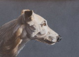 Tom - Pastel pencil on Clairefontaine Pastelmat