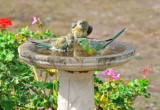 At the Bird Bath