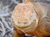 The Galapagos Islands - II
