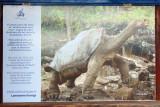Lonesome George, the last Pinta Island tortoise
