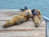 Sea lions on the dock, Galapagos Islands