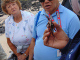 Talking about the shell of a dead crab, Galapagos Islands