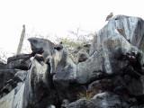 Cliffs at Playa de los Perros, Galapagos Islands