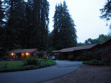 Early morning at the resort, amidst the redwoods