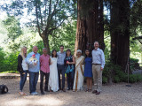 Families under the redwoods