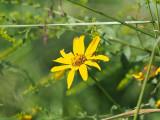 Unknown flower, Forest Park, St. Louis