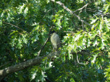 The night heron - Forest Park, St. Louis