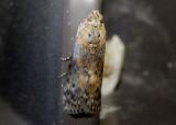 5510-6255 - Pyralidae through Drepanoidea