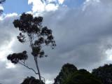 i_go_among_trees