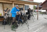 Looking for Rustic Bunting