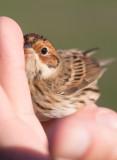 Birds in Sweden – in the hand