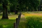 In het bos