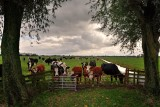 Horses, cows and so on