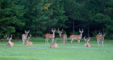 Deer, Birds and More - Our Backyard