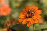 Flowers Sonoma  2