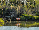 Flamingos & Oyster Catcher, Cerro Dragon