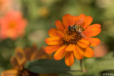 Flower with Bee  3