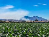 Mt. Diablo Fire  1
