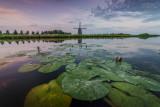Landschap - Nederland - Uitgeest