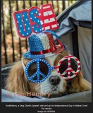 Huckeleberry, a King Charles Spaniel, dressed up for Independence Day in Walnut Creek.
