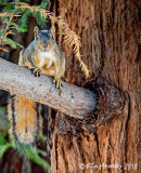 Birds, Insects & Wildlife  (SF East Bay Area)