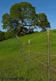 Rossmoor Views / Landscapes