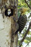 nest release