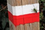 Pole with grasshopper