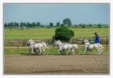Bakodpuszta Equestrian Center