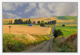 Palouse and Eastern Washington