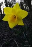 Day075_Flower.jpg