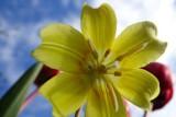 Day095_flower.jpg