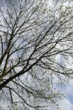 Day116_Spring_tree.jpg