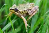 Frogs/Kikkers